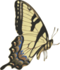 Butterfly Small Clip Art