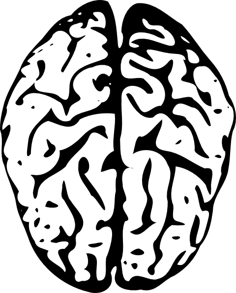 Brain Clip Art at Clker.com - vector clip art online, royalty free ...
