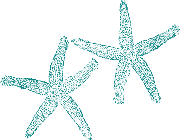 Turquoise Starfish Clip Art At Clker Com Vector Clip Art