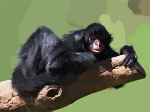 Hugging To A Tree Black Spider Monkey Clip Art