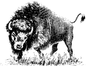 Buffalo-full Clip Art
