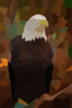 American Bald Eagle Clip Art