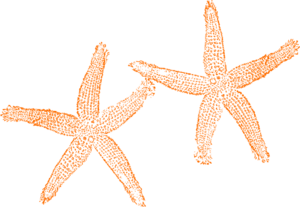 Orange Starfish Clip Art