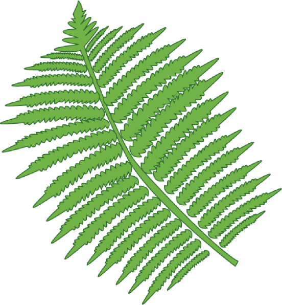 Clip Art Fern Clipart fern clip art at clker com vector online royalty free download this image as