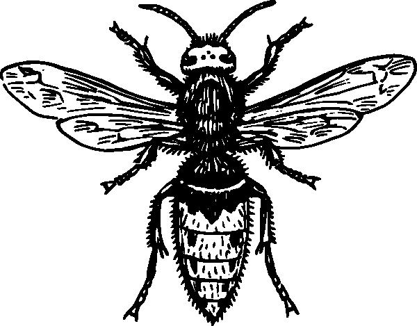 hornet outline