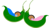 Two Sleeping  Peas In A Pod Clip Art