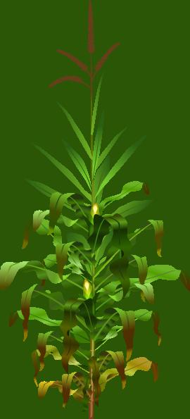 Corn Plant Clip Art at Clker.com - vector clip art online, royalty ...