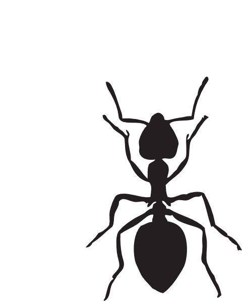 Black Ants Clipart Ant Vector Online Clipart