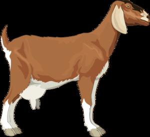 goat clip art at clker com vector clip art online royalty free rh clker com goat clipart png goat clipart outline