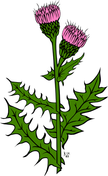 garden weeds clipart - photo #3