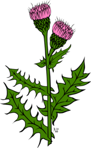 Weed With Pink Buds Clip Art