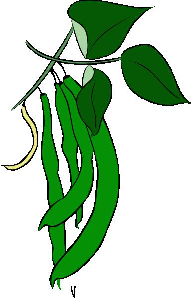 green beans clip art at clker com vector clip art online royalty rh clker com screen beans clipart free download green beans clipart