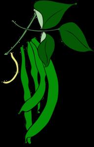 green beans clip art at clker com vector clip art online royalty rh clker com bean clip art images beans clipart png