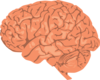 Realistic Looking Brain Clip Art
