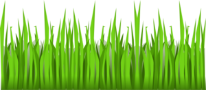 Grass Tall Picture Clip Art