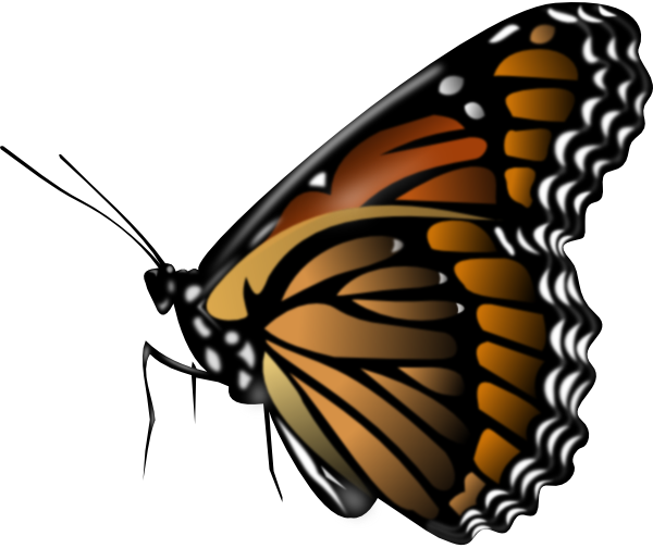 Monarch Butterf... Insect Drawings Clip Art