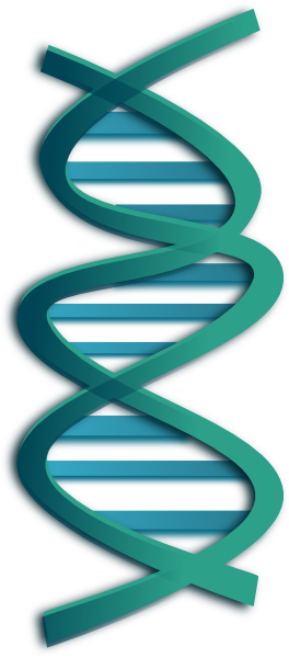 dna clip art at clker com vector clip art online royalty free rh clker com dna clipart clipart dna