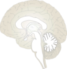 Brain Lateral View Clip Art
