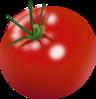 Tomato plant clip art  Public domain vectors