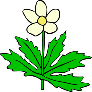 Anemone Canadensis Clip Art