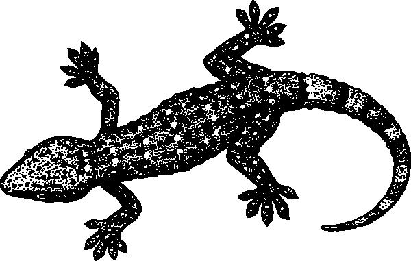 gecko malvorlage