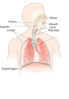 Newer And Better Respiratory Clip Art
