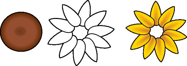 Layer Flower Petals First Layer Flower Petals