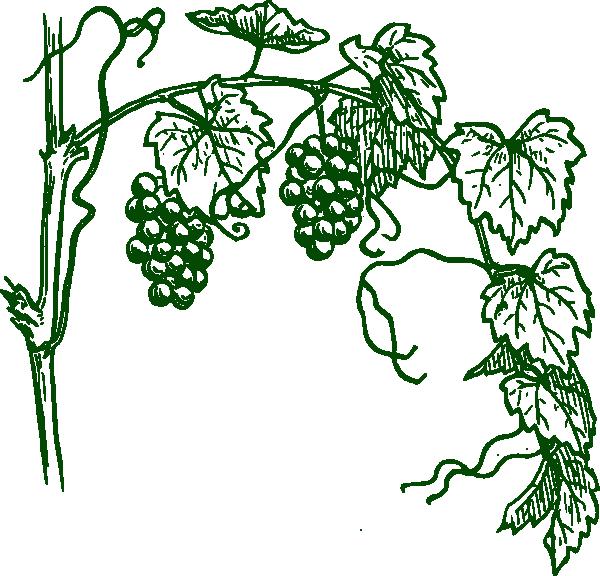 green grapevine clip art at clker com vector clip art online rh clker com grapevine clipart images grapevine clipart free