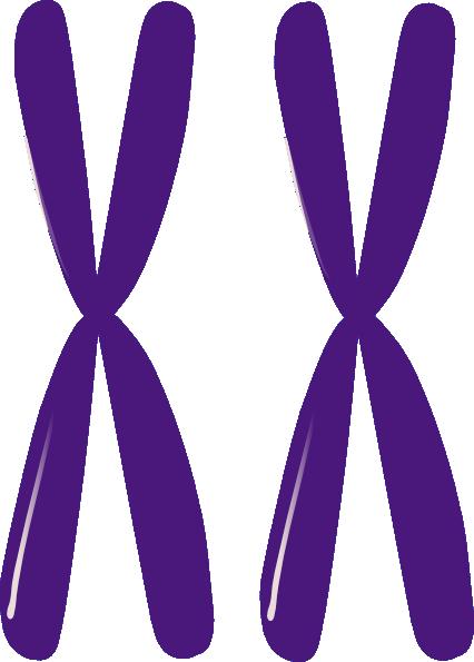 Homologous Chromosomes Clip Art at Clker.com - vector clip art online ...