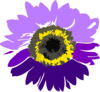 Purple Sunflower Clip Art