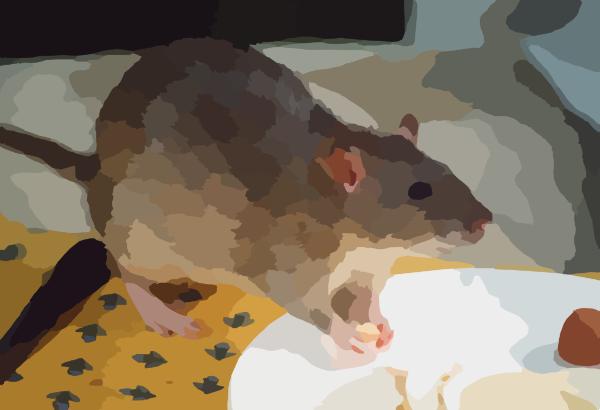Rat Agouti clip art