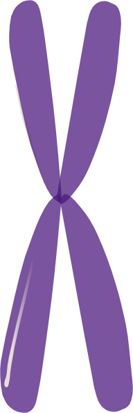 Single Chromosome Hi on Unlabeled Chromosome Diagram