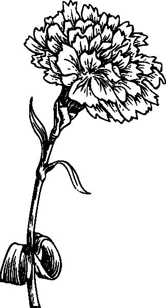 324 x 599 png 57kBMarigold