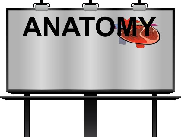 Anatomy Clip Art at Clker.com - vector clip art online, royalty free ...