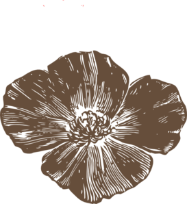 Brown Poppies Clip Art