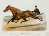 The Wonderful Mare Maud S. Record 2:10 1/4 Clip Art