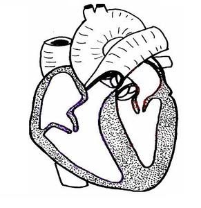 Heart Ls Unlabelled   Free Images at Clker.com - vector ...