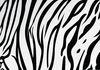 Tiger Stripe Pattern Clipart Image