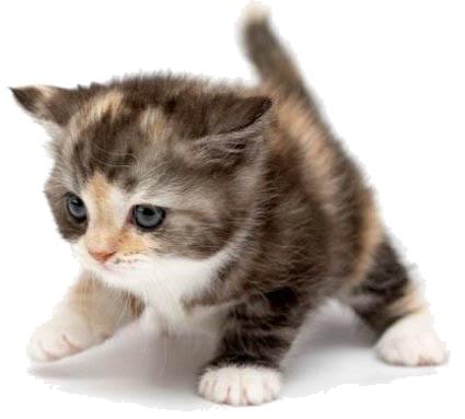 cute cat free images at clker com vector clip art cute kitten clip art for kids cute kittens clip art