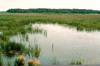 Examples Commensalism Wetland Image