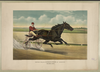 Trotting Stallion Directum By Director: Record 2:05 1/4 Image