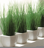 Indoor Ornamental Grasses Image