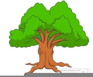 Oaktree Clipart Free Images At Clker Com Vector Clip Art Online