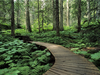 Forest Trail Wallpapers X Image