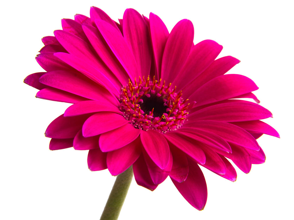 Flower | Free Images at Clker.com - vector clip art online, royalty free & public domain