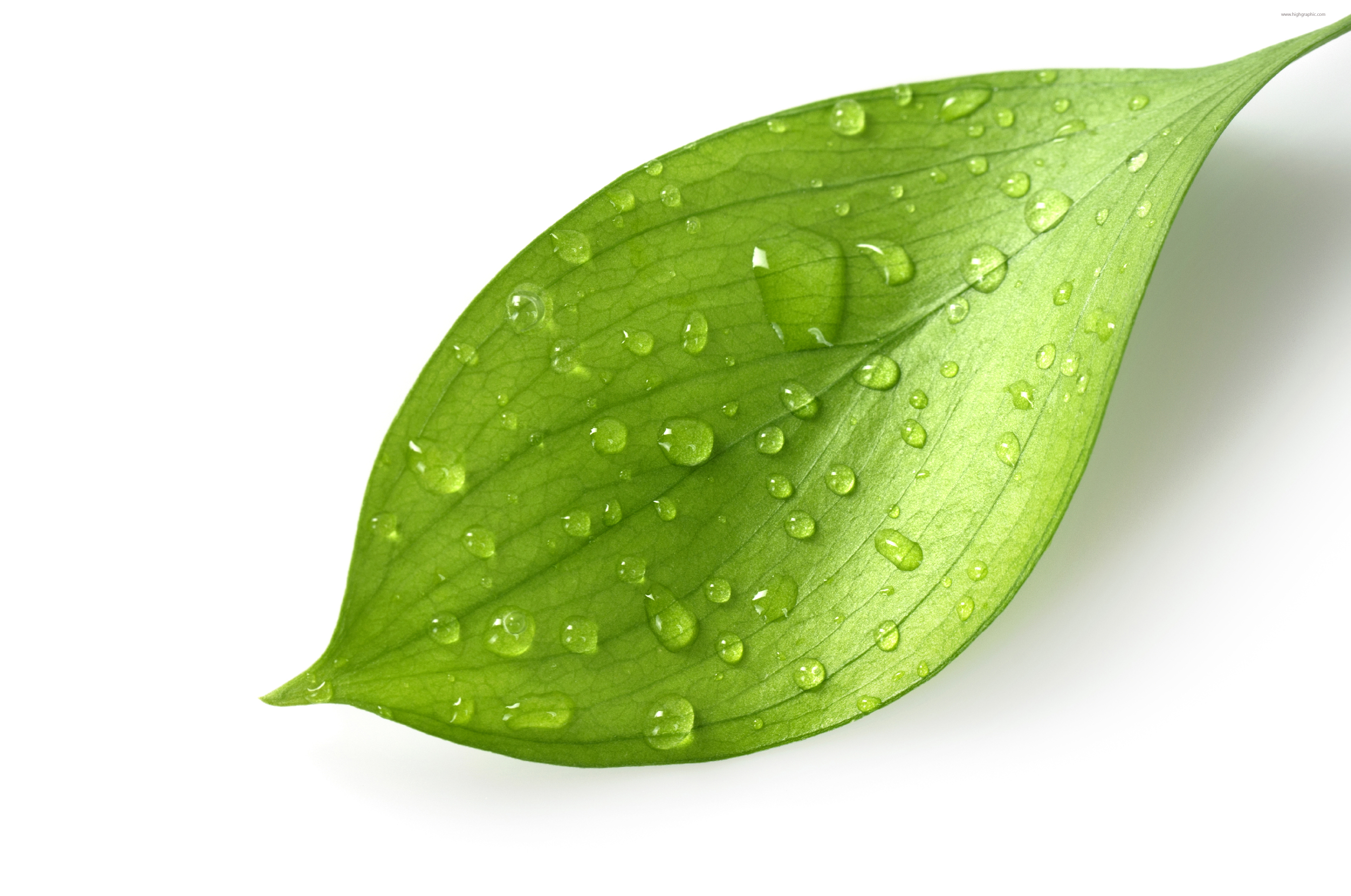 free clipart green leaf - photo #32