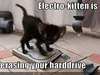 Funny Pictures Kitten Erases Your Hard Drive Image