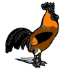 Hsain Cemani Rooster Image