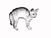 Kitten With Hackles Stamped Image