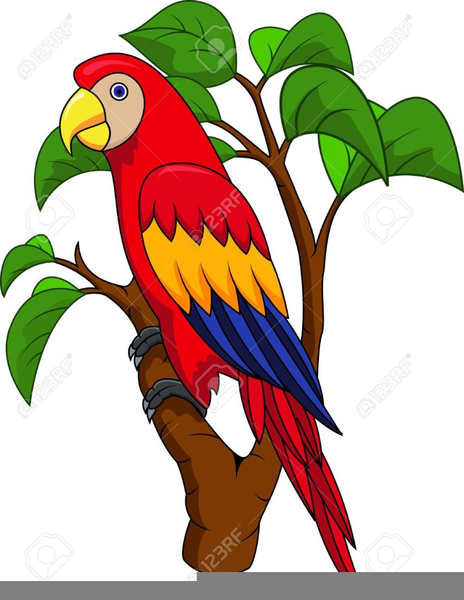 Free Pirate Parrot Clipart Free Images At Clker Com Vector Clip Art Online Royalty Free Public Domain